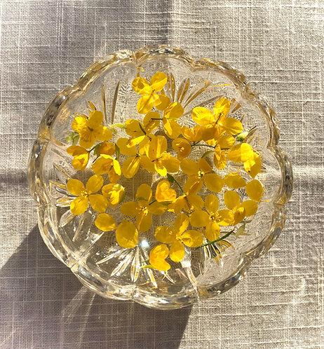Celandine Flower Essence
