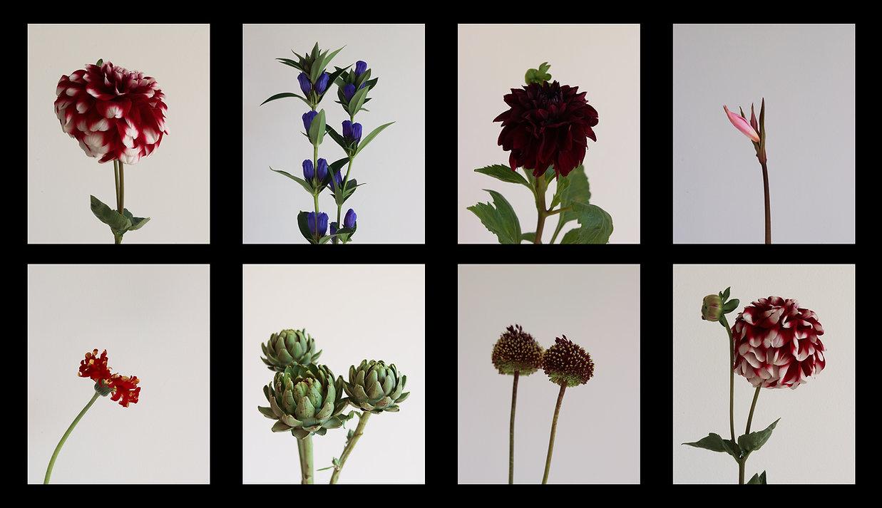 intro.flower.banner.01.jpg