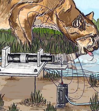 V2 Mountain Lion Pull Spinner KHudson CA
