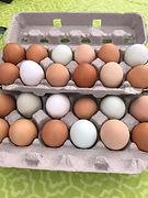sfm chicken eggs.jpg