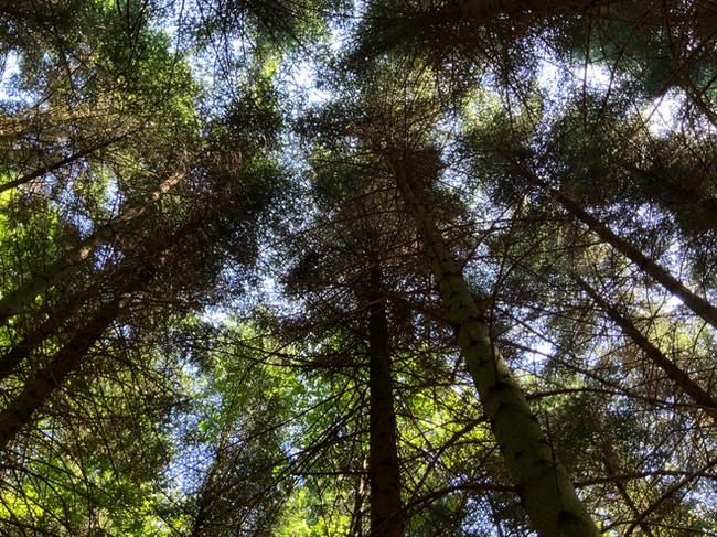 Black Forest.jpeg