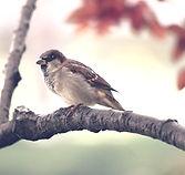 bird-9950_1280_edited.jpg