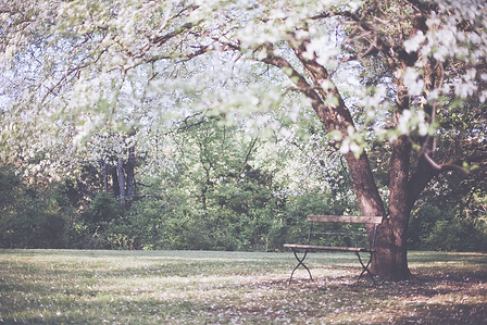flowering-tree-349973_1280_edited.png