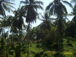 Thailand 2010-0182.JPG