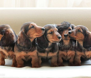 hot dog puppies