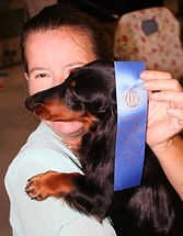 blue ribbon dachshund