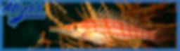 Banner003.jpg