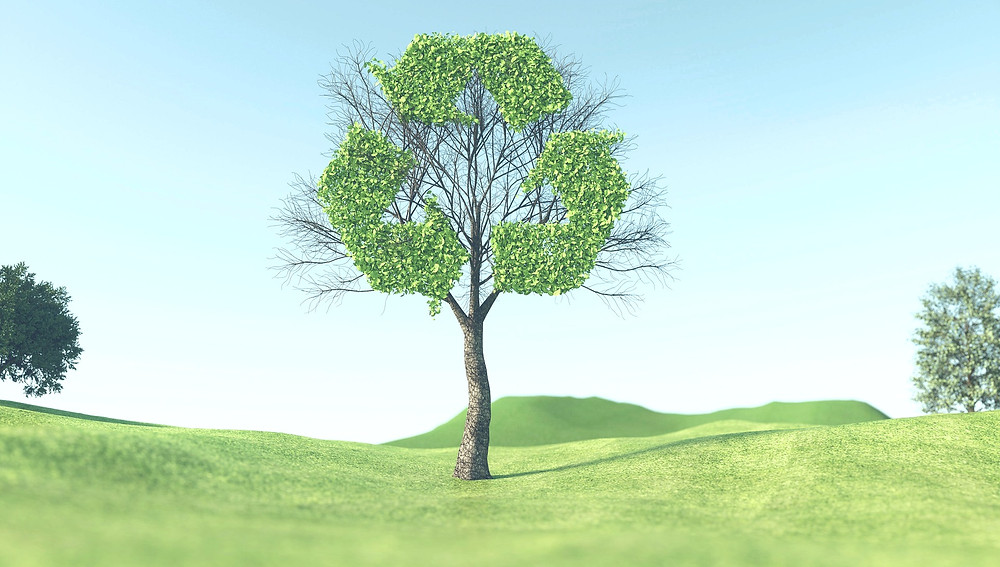 Tree with recycling symbol