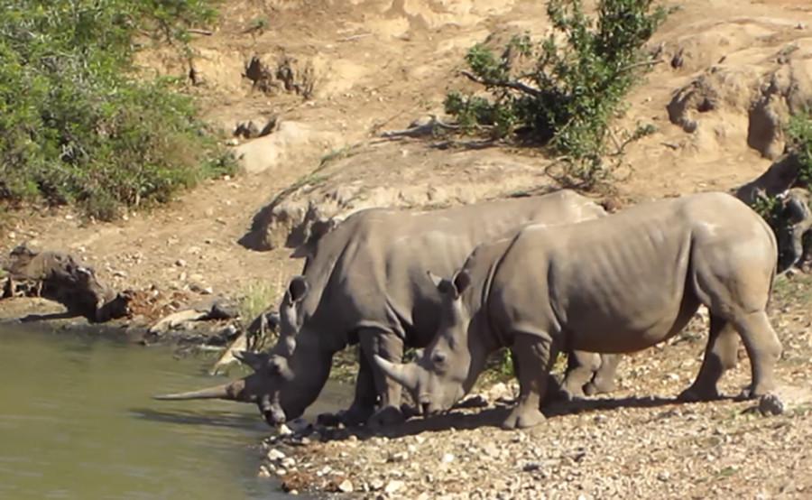 15 Rhino.jpg