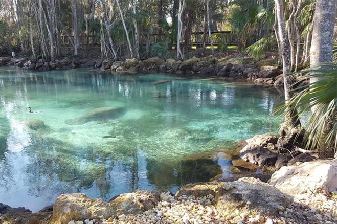 14 crystal river.jpg
