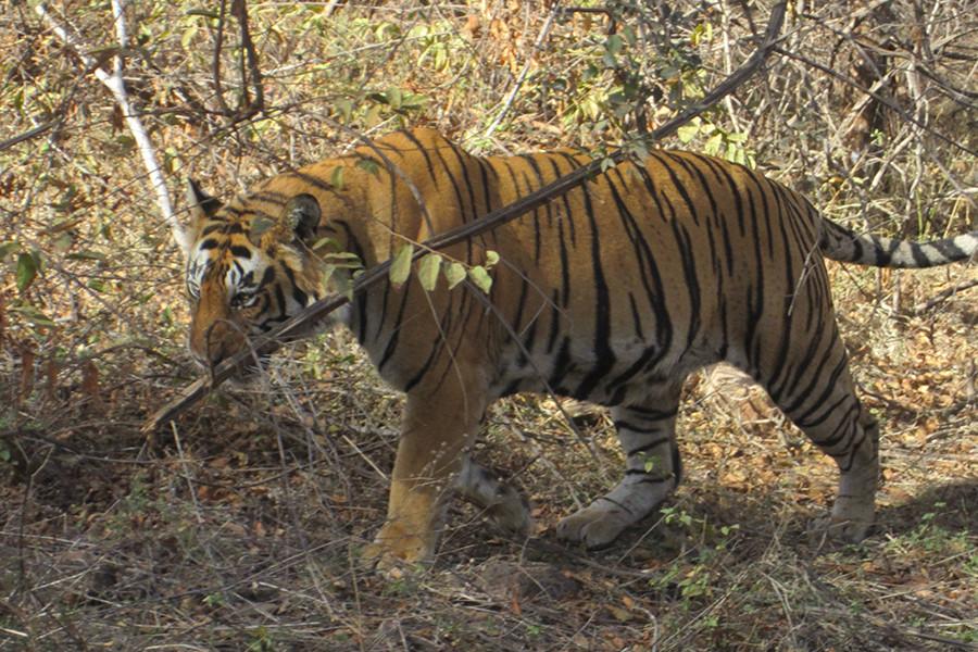2011_India4.jpg