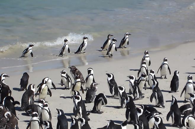 07 penguins.jpg