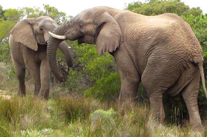 16 elephants.jpg