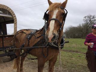 Mesquite Trail Drivers Ride Again!