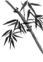 98815649-bamboo-trees-hand-drawn-ink-jap