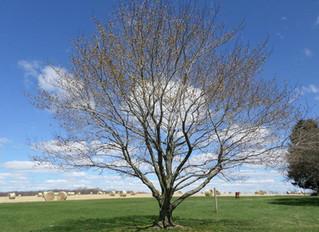 Why Tree Shadow Press