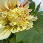 yellowflower.jpeg