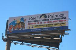 9071 PSA - Reef A Palooxa POP Camera 9.29.15