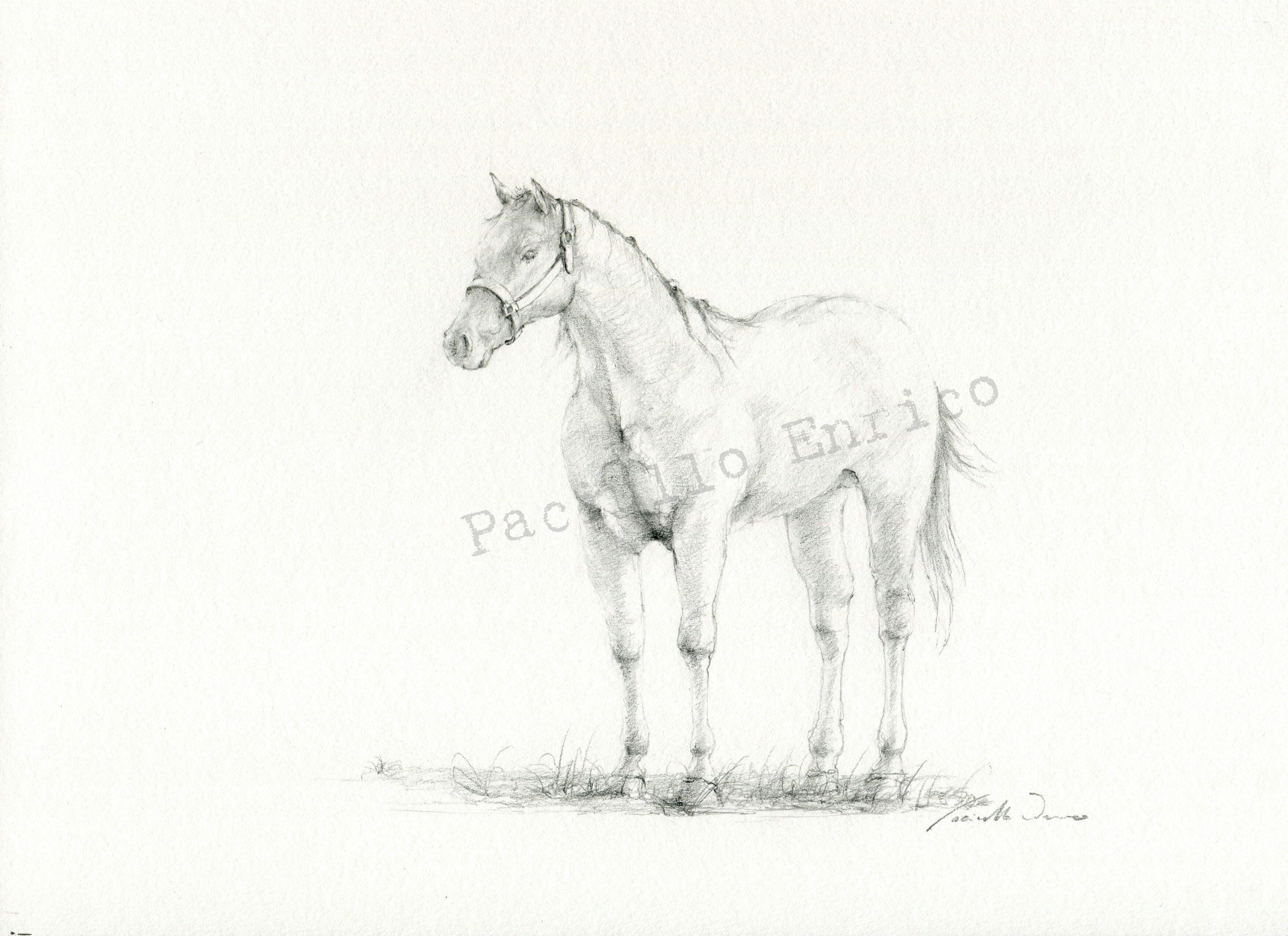 364 caballo a lapiz 20x 29 30 novembre 2