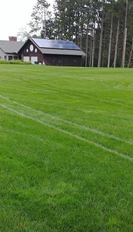 lawn2.jpg