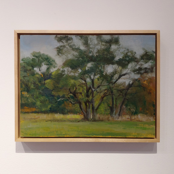 SOLD - Trees in Autumn, Waveny Park,  New Canaan, CT - Stacey Creem