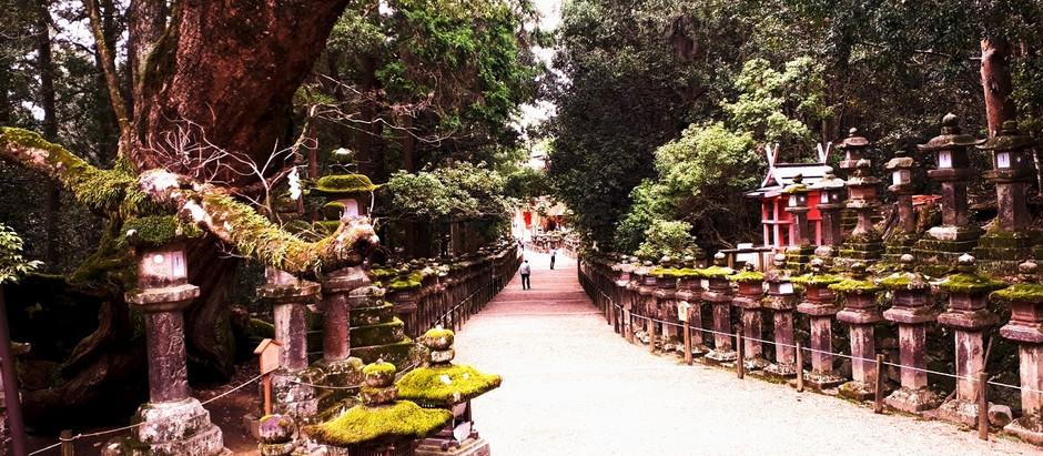 Nara (11/16)