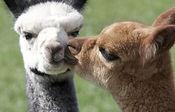 baby-kisses-940x400-600x384.jpg