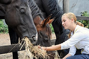 girl-feeding-horses-hay-DPC_33932193.jpg