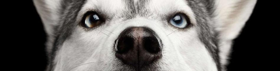 dogeyes-1024x683_edited_edited.jpg