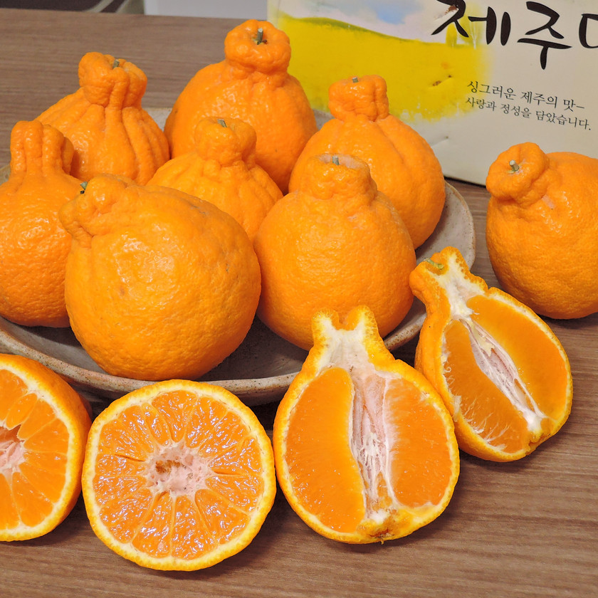 Hallabong are citrus from Jeju that look like the famous Hallasan mountain