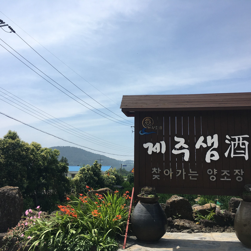 Jeju Saemju is a traditional rice wine brewery with tastings for visitors