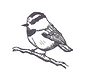 Chickadee Photo.png