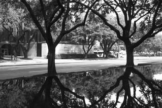 Urban Trees 1