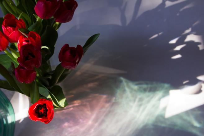 Tulip's Shadow