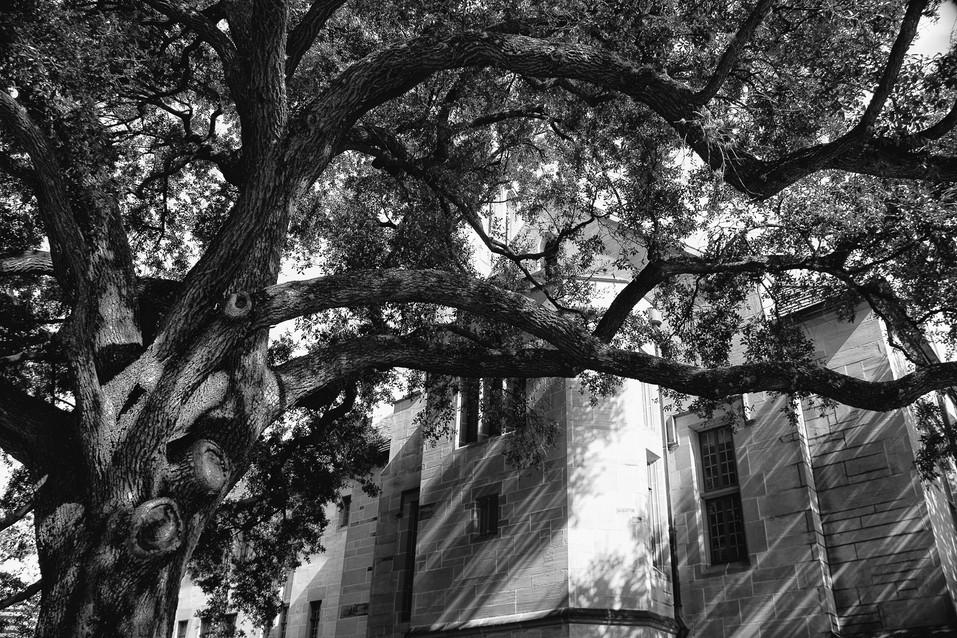 Urban Trees 3