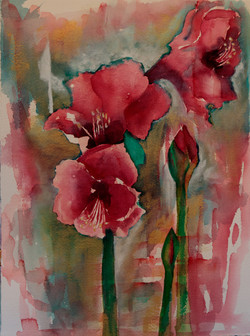 Amaryllis Series: Drenched in Red