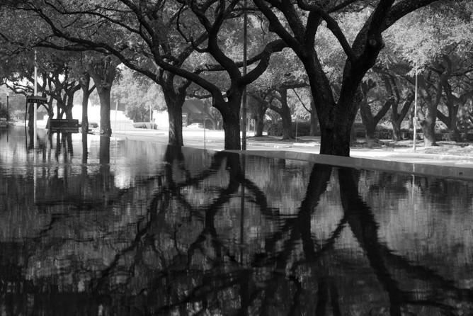 Urban Trees 4