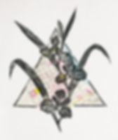 Iris Hexagona.jpg