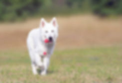 Hund Running