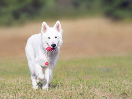 Healing Orthopedic Problems in Pets with Red Light Therapy