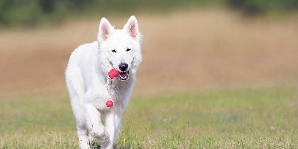 6 Week Dog Training Class (Level 2)