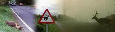 deerroads.jpg