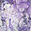Thumbnail: Purpura