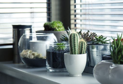 Aluminum Blinds - Succulents - Signature