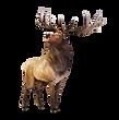 Lawrence_Elk.png