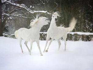 Horse Birthdays around the corner!