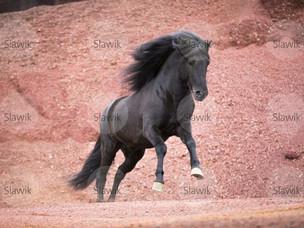 New horse: Moonbolt