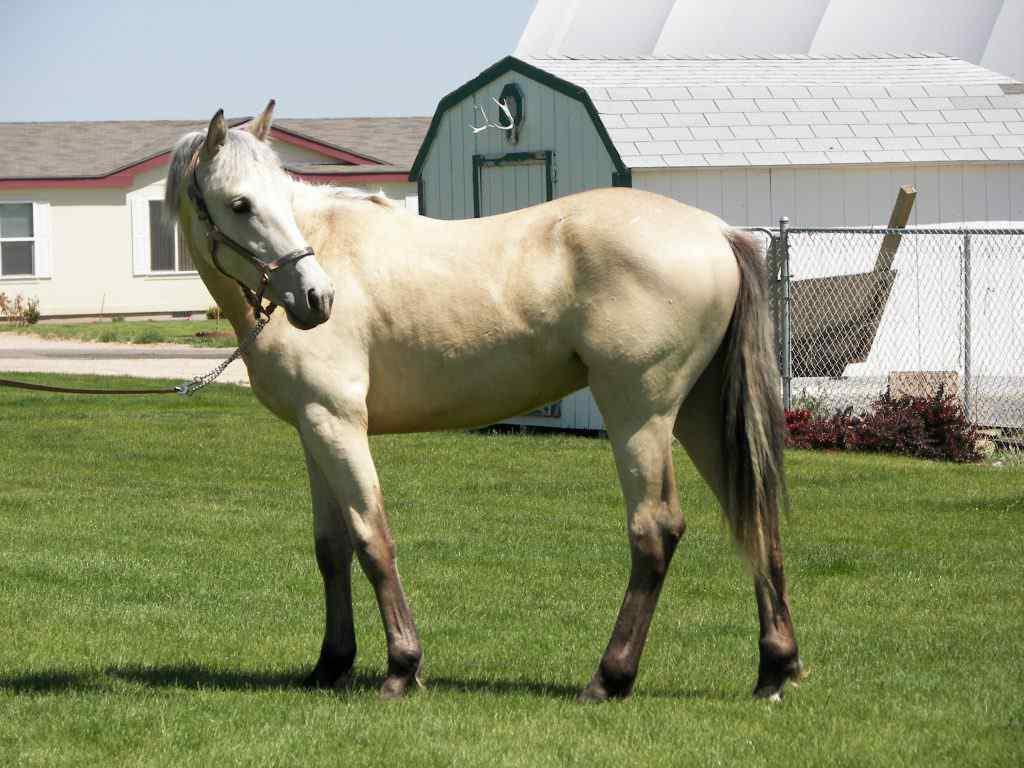 Blazer Horse.jpg