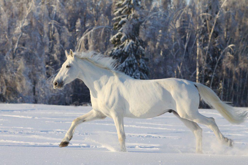 Camarillo White Horse.jpg