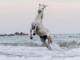 New horses: Sale